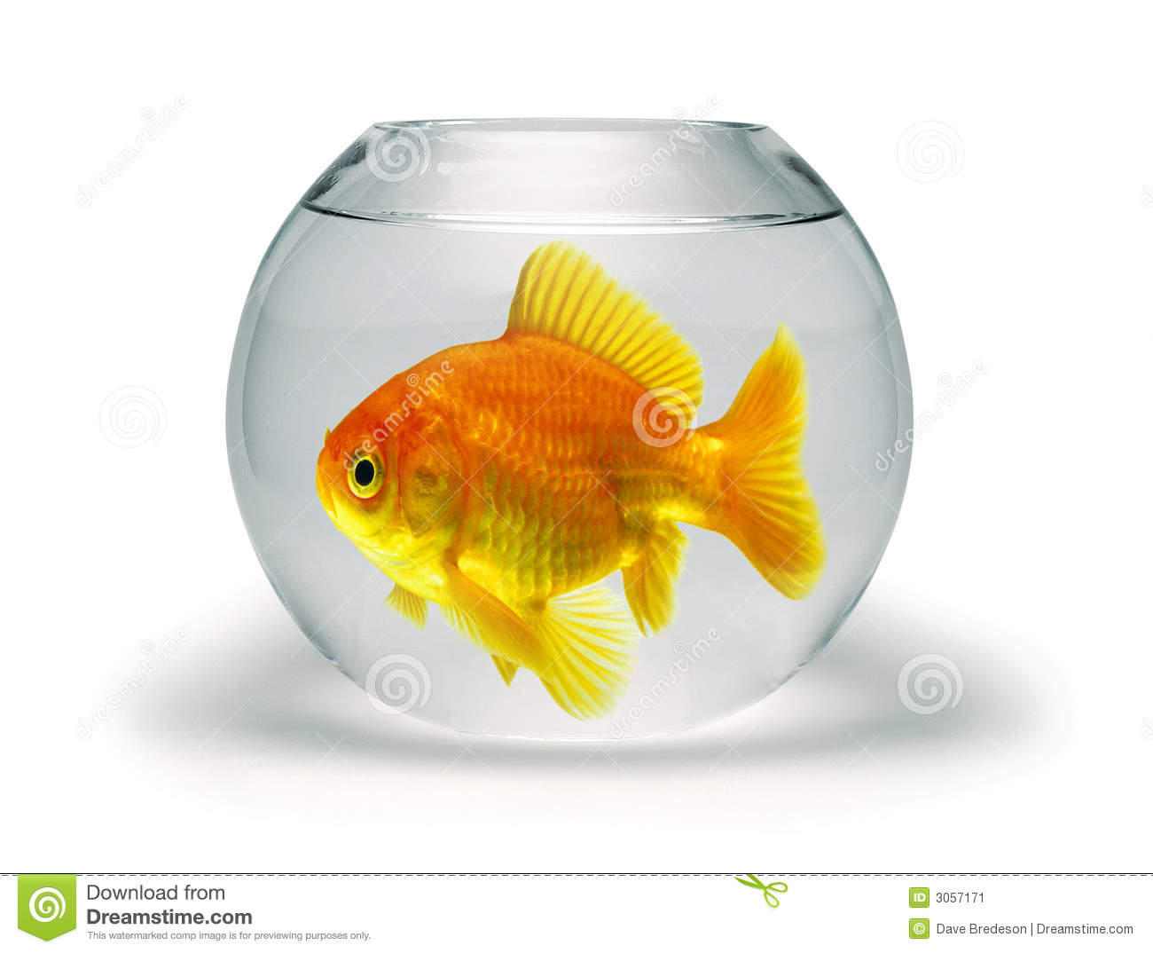 Goldfish in small bowl stock image image 3057171 for Small fish bowl