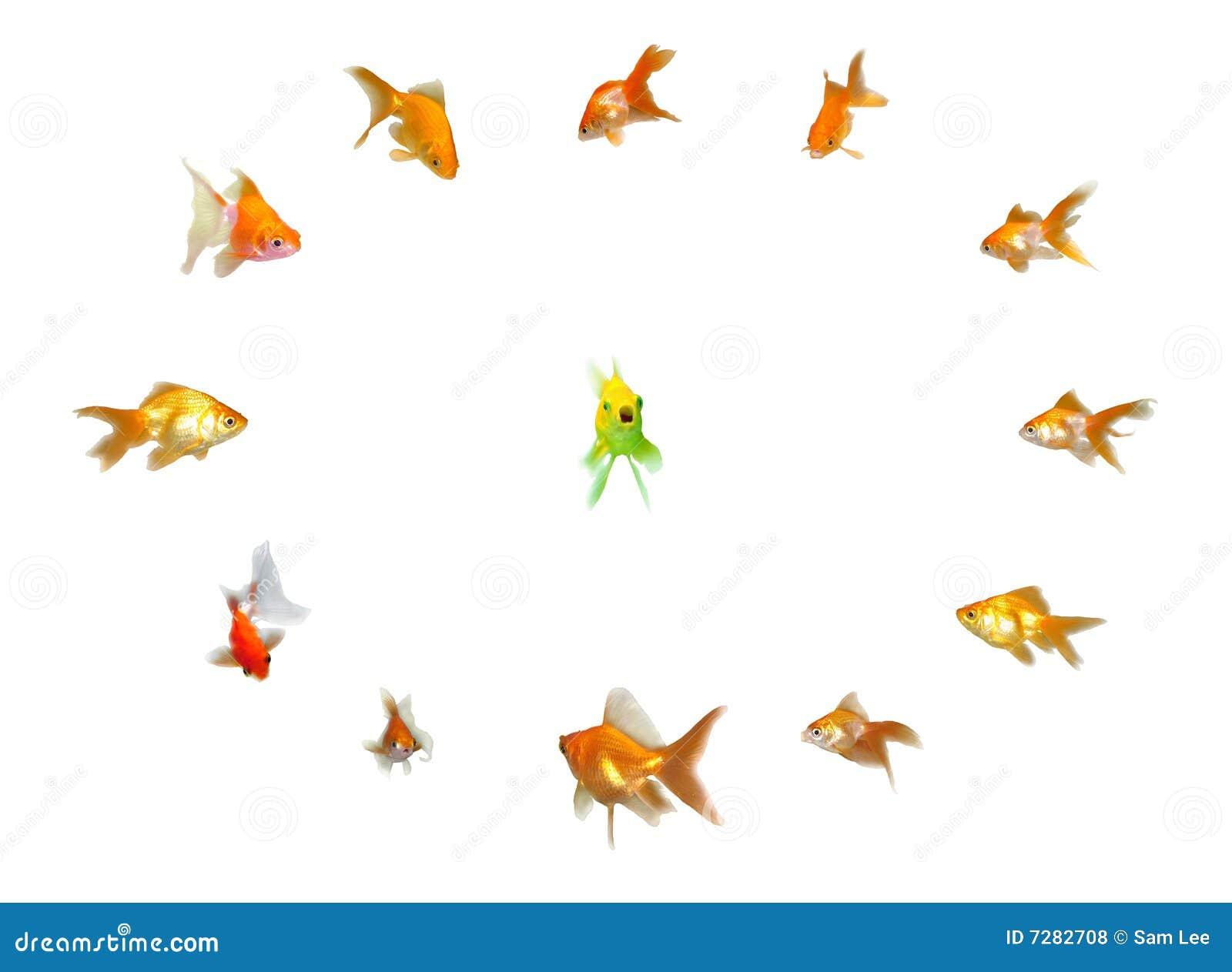 Goldfishes fijados - dirección