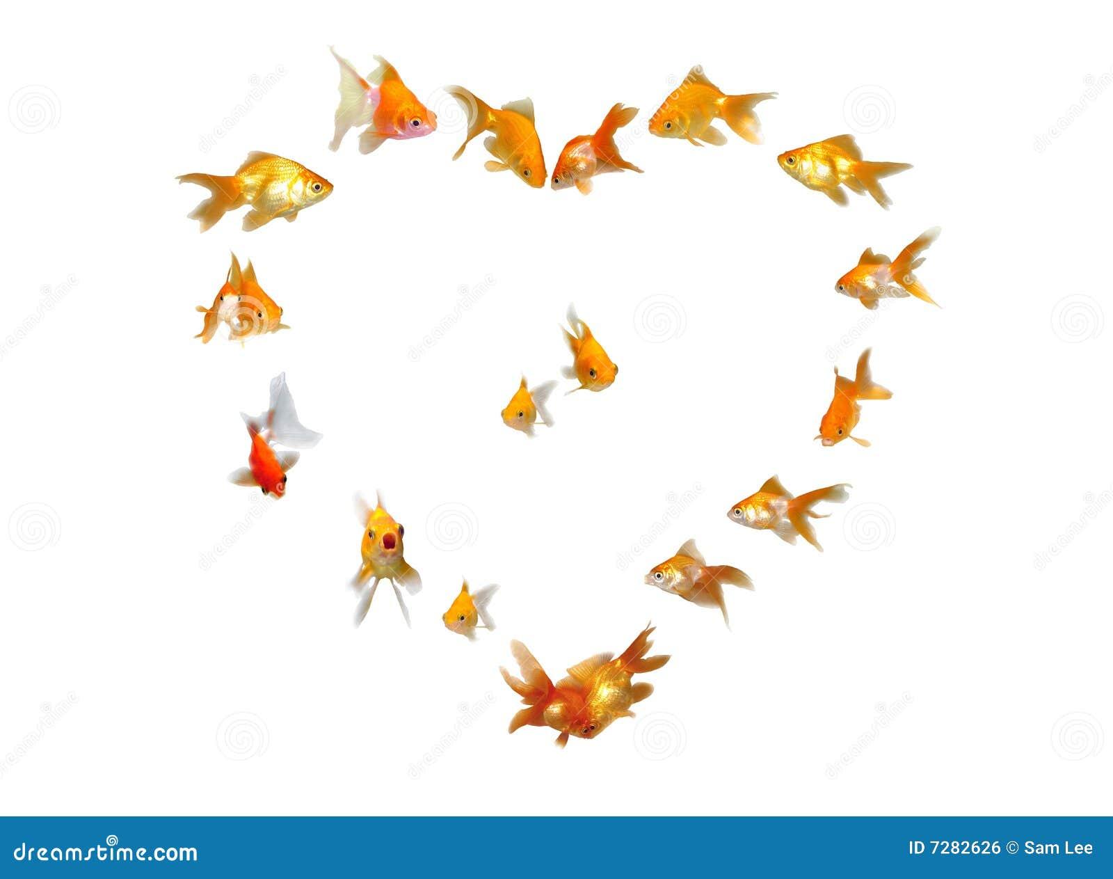 Goldfishes (fondo en forma de corazón del marco)