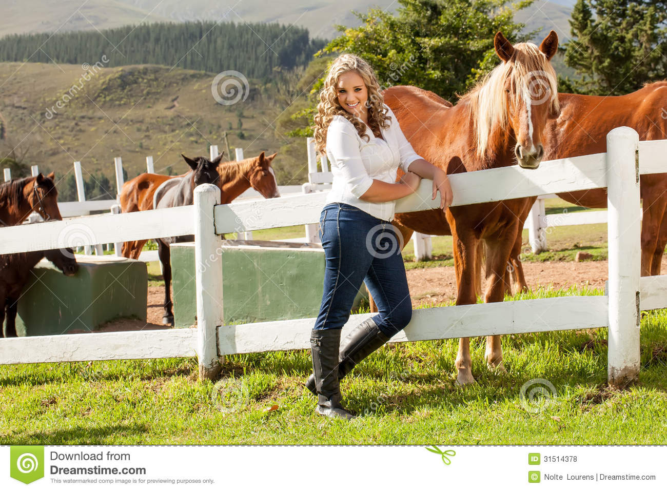 ... white picket fence with a mahongany colored horse equally interested