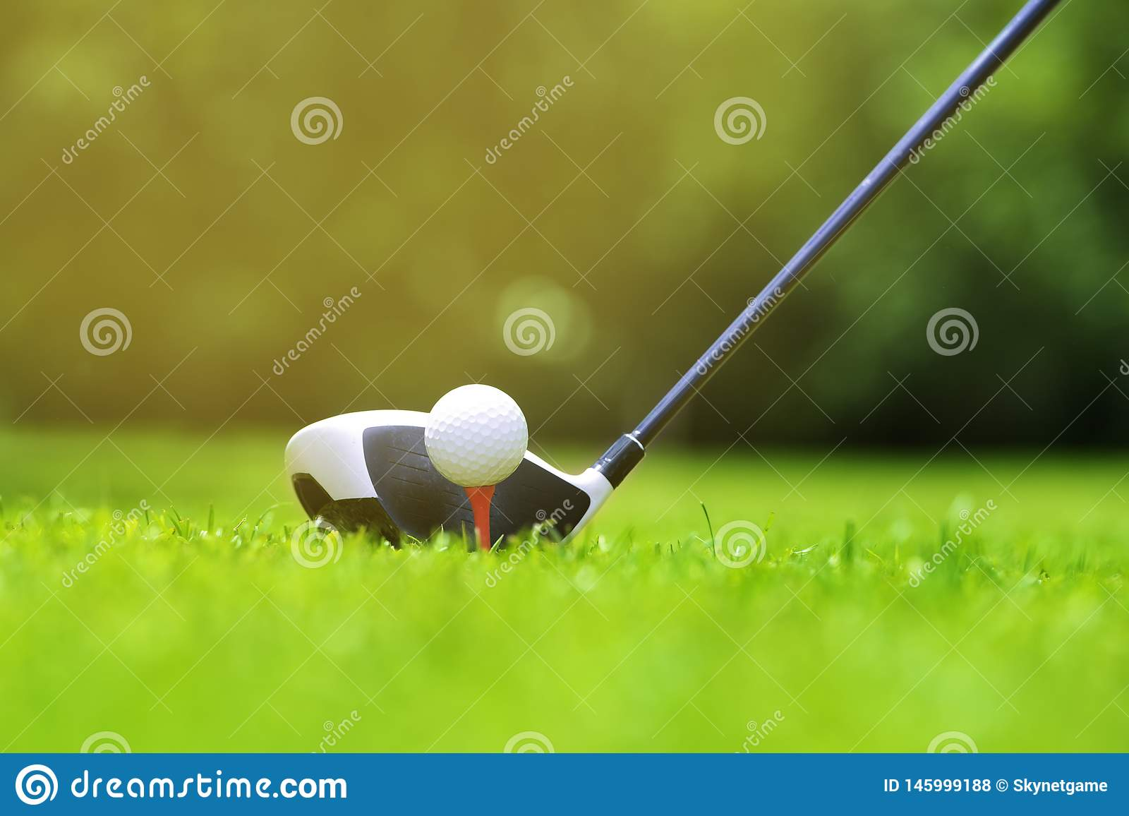 Golf ball on tee in front of driver on a gold course grass green field,the driver positioned ready to hit the ball