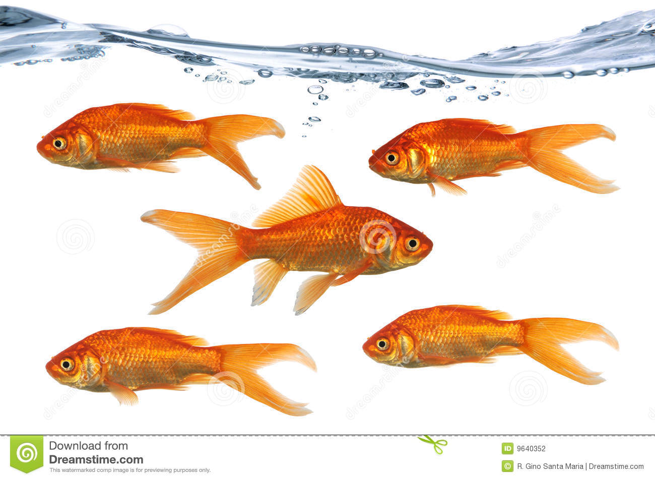 Golf fish swimming stock photography image 9640352 for Dream of fish swimming