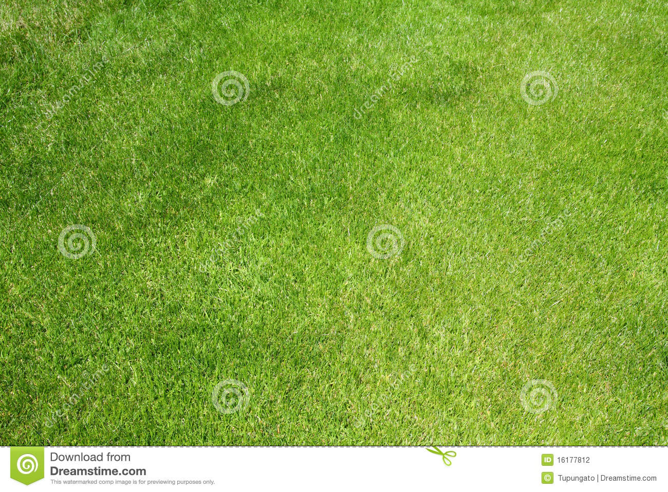 Golf grass stock photo. Image of grass, course, background ...