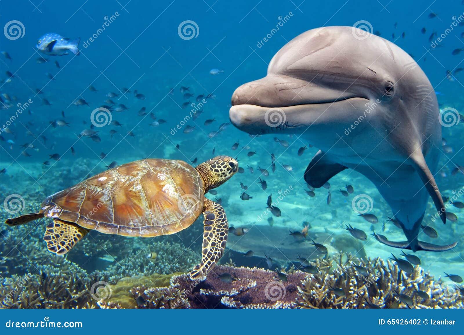 Golfinho e tartaruga subaquáticos no recife
