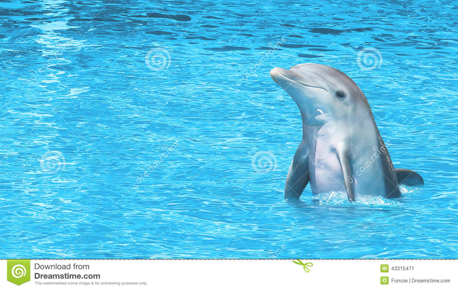 Golfinho feliz no mar