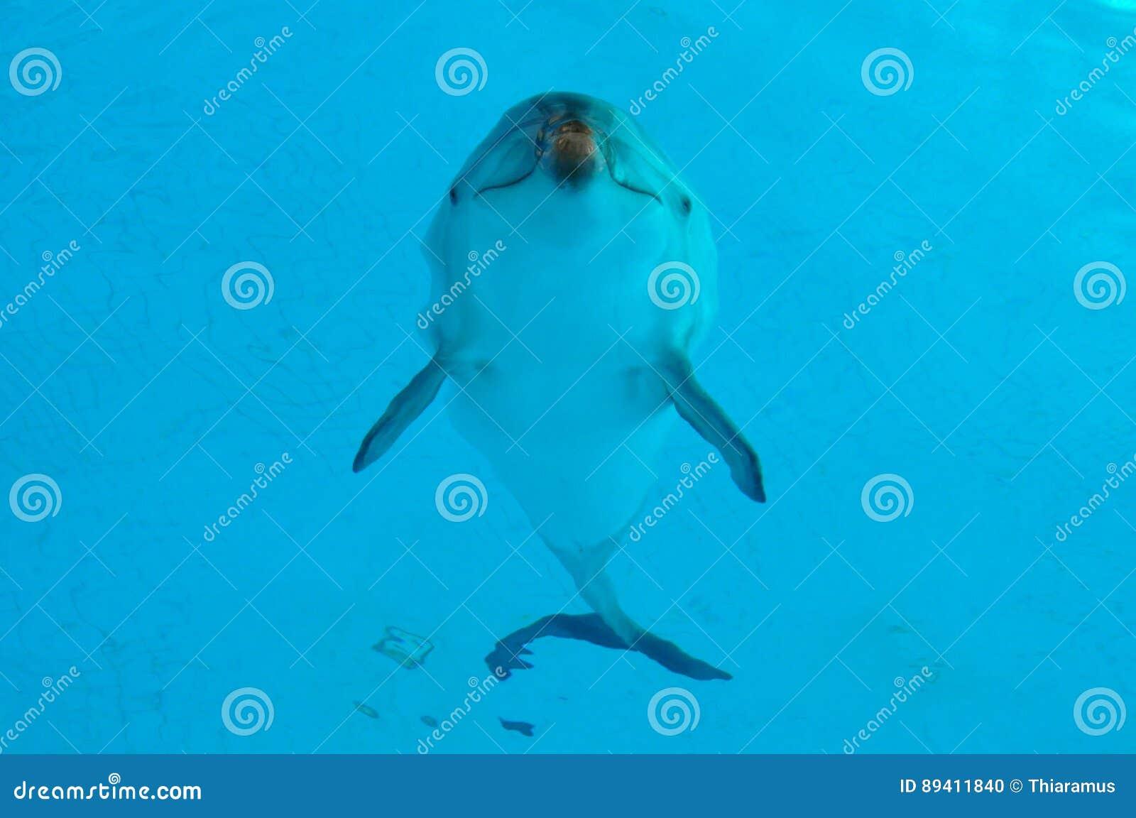 Golfinho subaquático