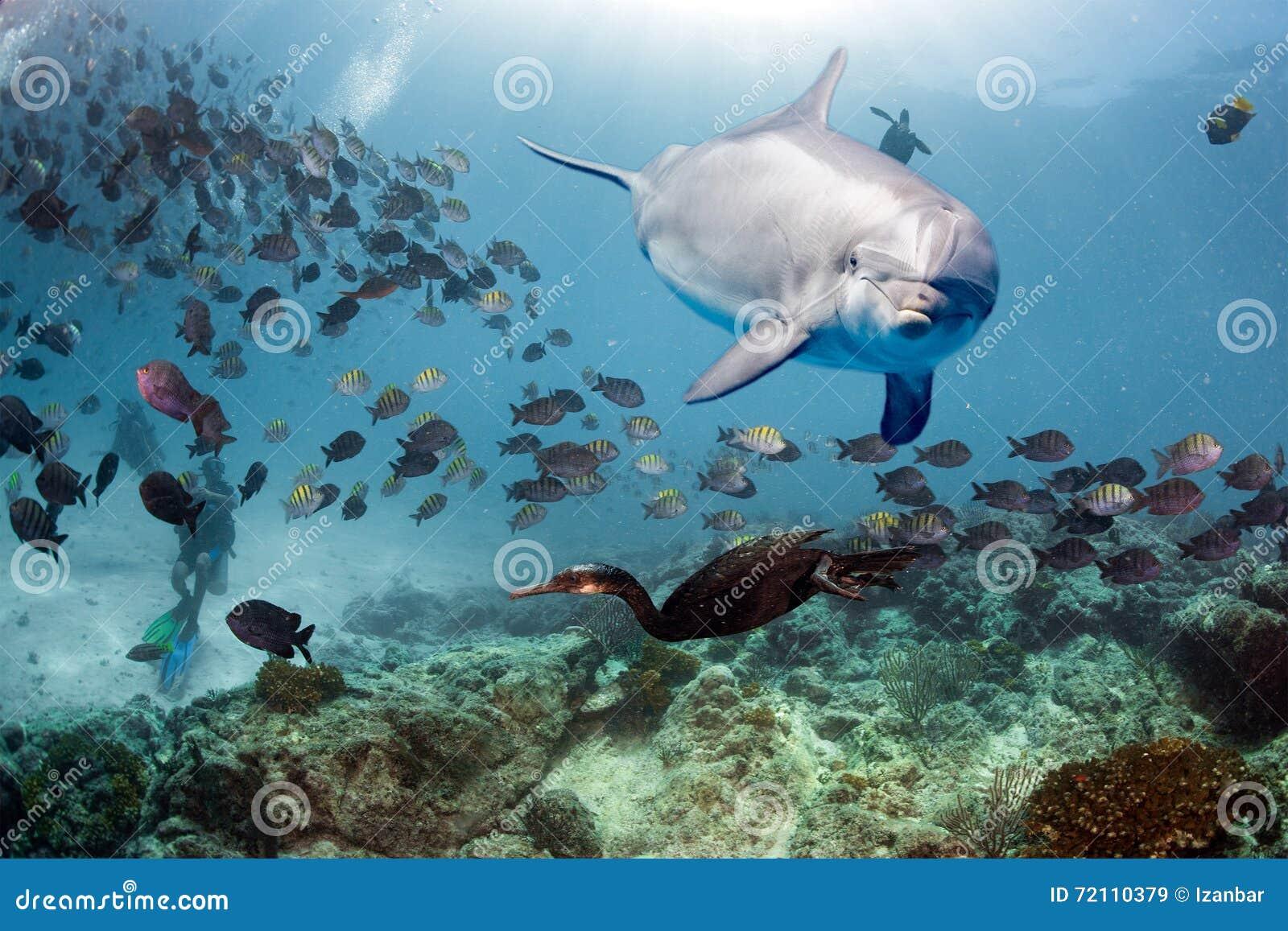 Golfinho subaquático no olhar ascendente do fim do recife