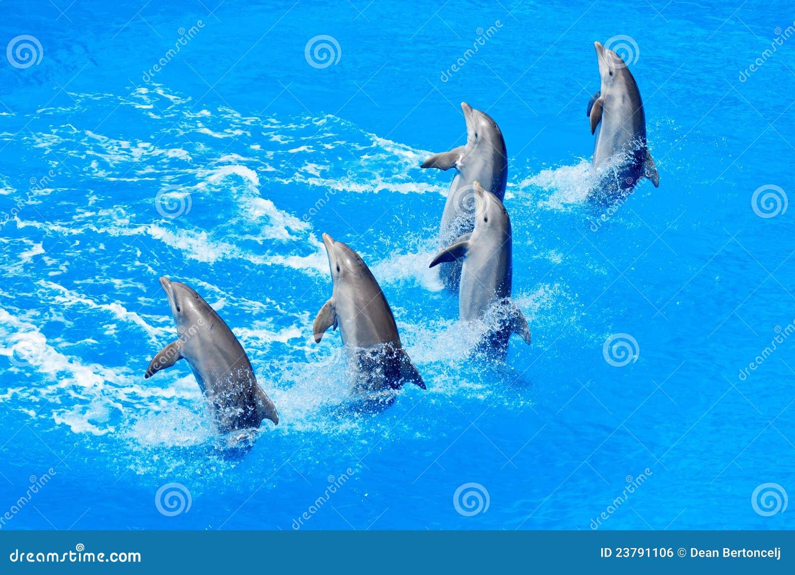 Golfinhos