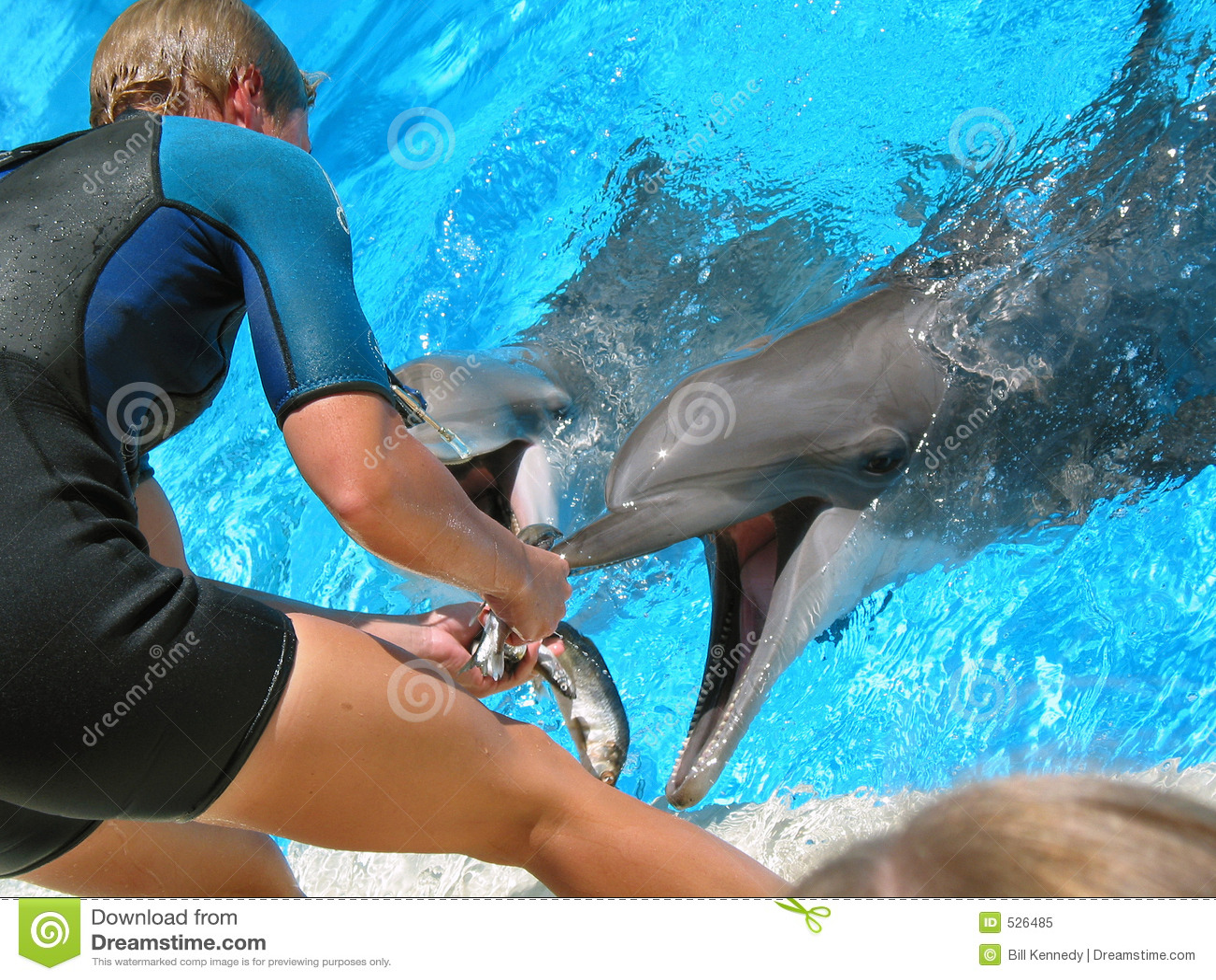 Golfinhos de alimentação