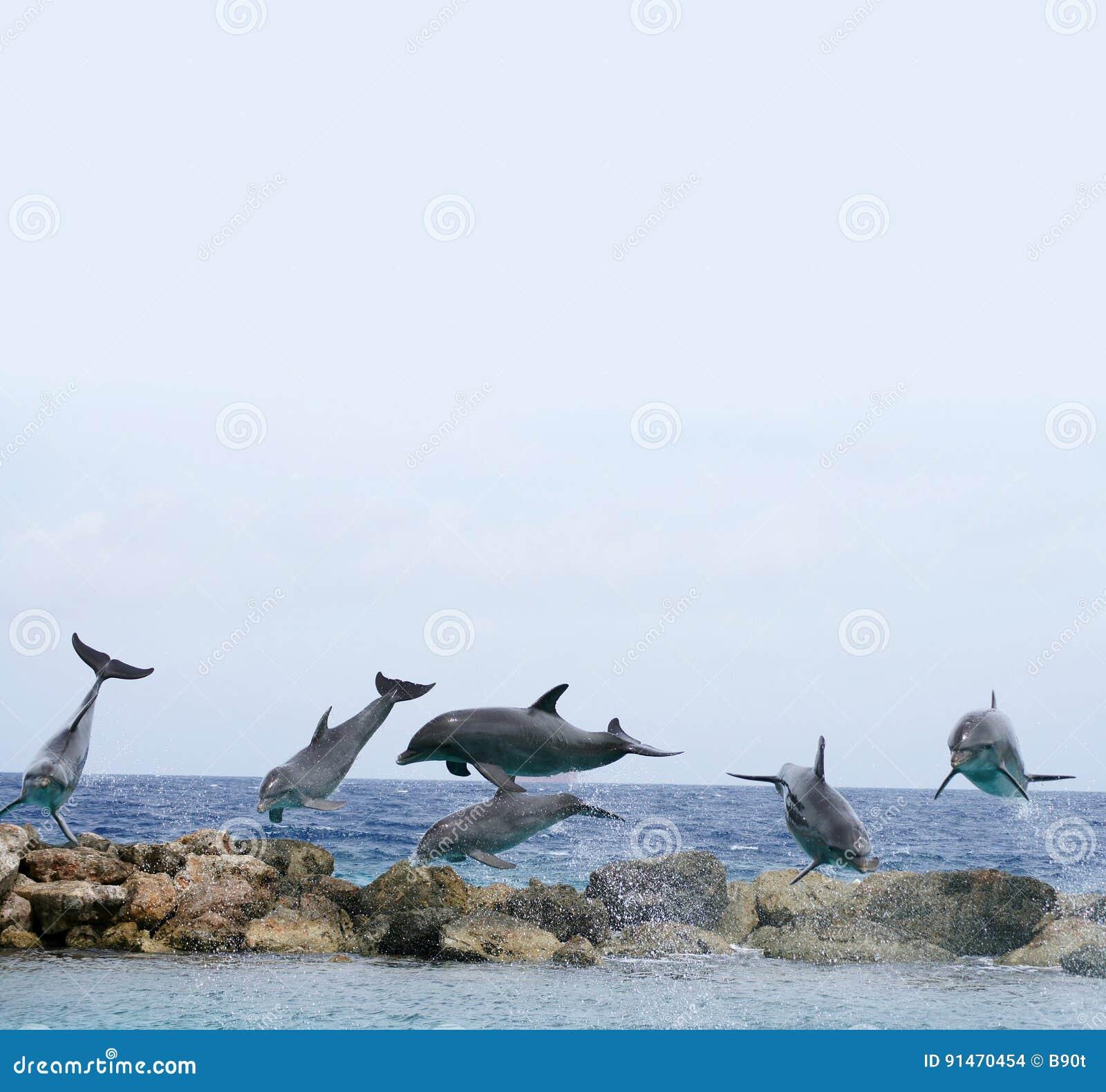Golfinhos do voo