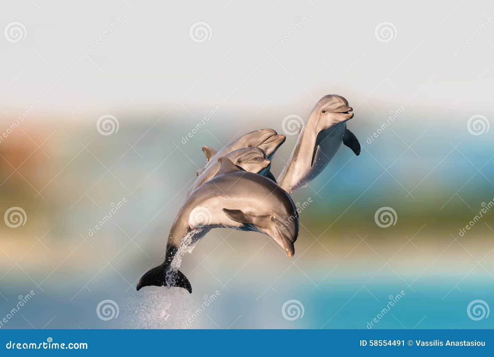Golfinhos do voo que têm saltar do divertimento da água