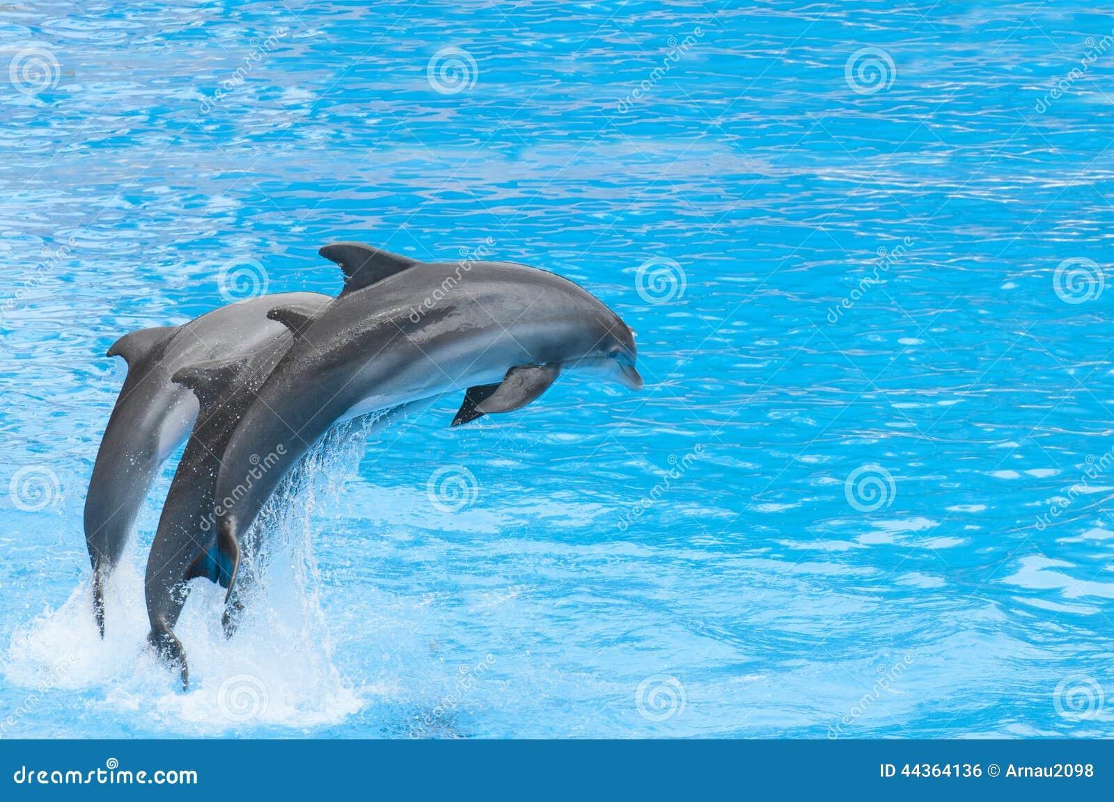 Golfinhos que nadam