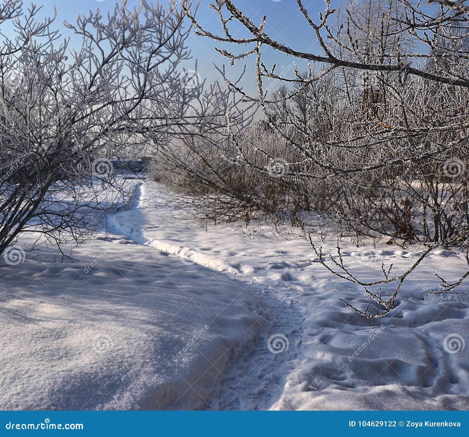 Download Golven Op De Vreedzame Kust De Reis Aan Australië Stock Foto - Afbeelding bestaande uit kleur, park: 104629122