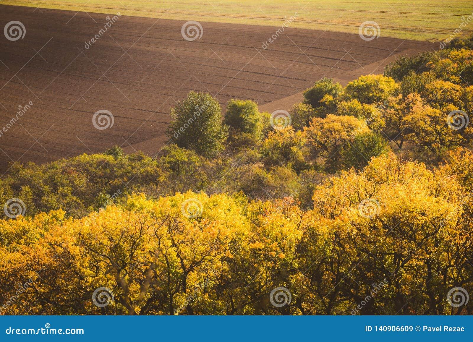 Golvende de herfstgebieden in Moravian Toscanië, Tsjechische Republiek