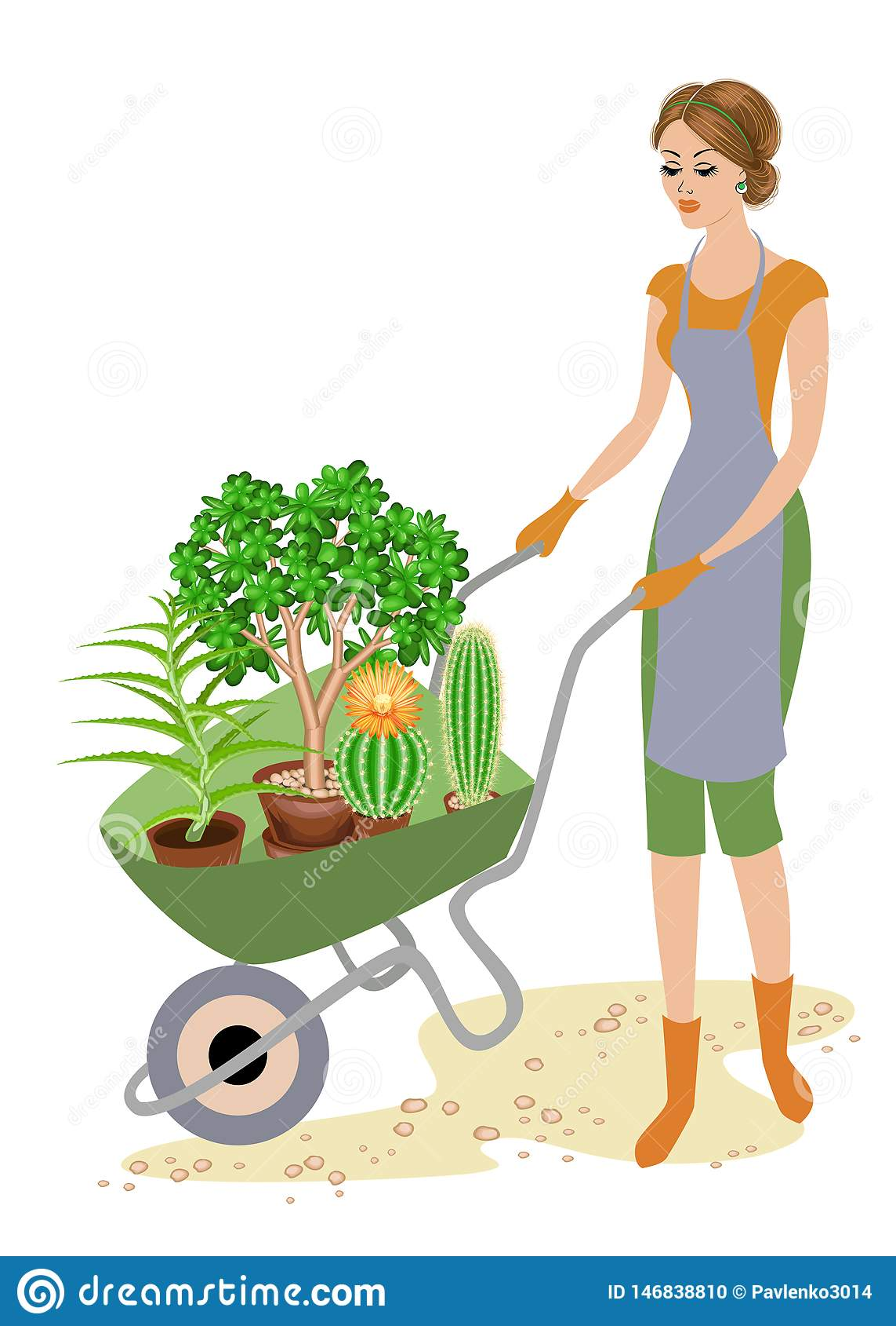 A good lady in work clothes. The girl wears a garden wheelbarrow with pots, cactuses, aloe, crassula. A woman works as a gardener
