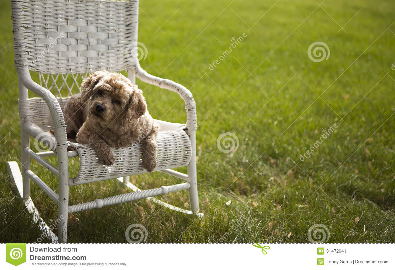 Good looking dog on a white wicker chair