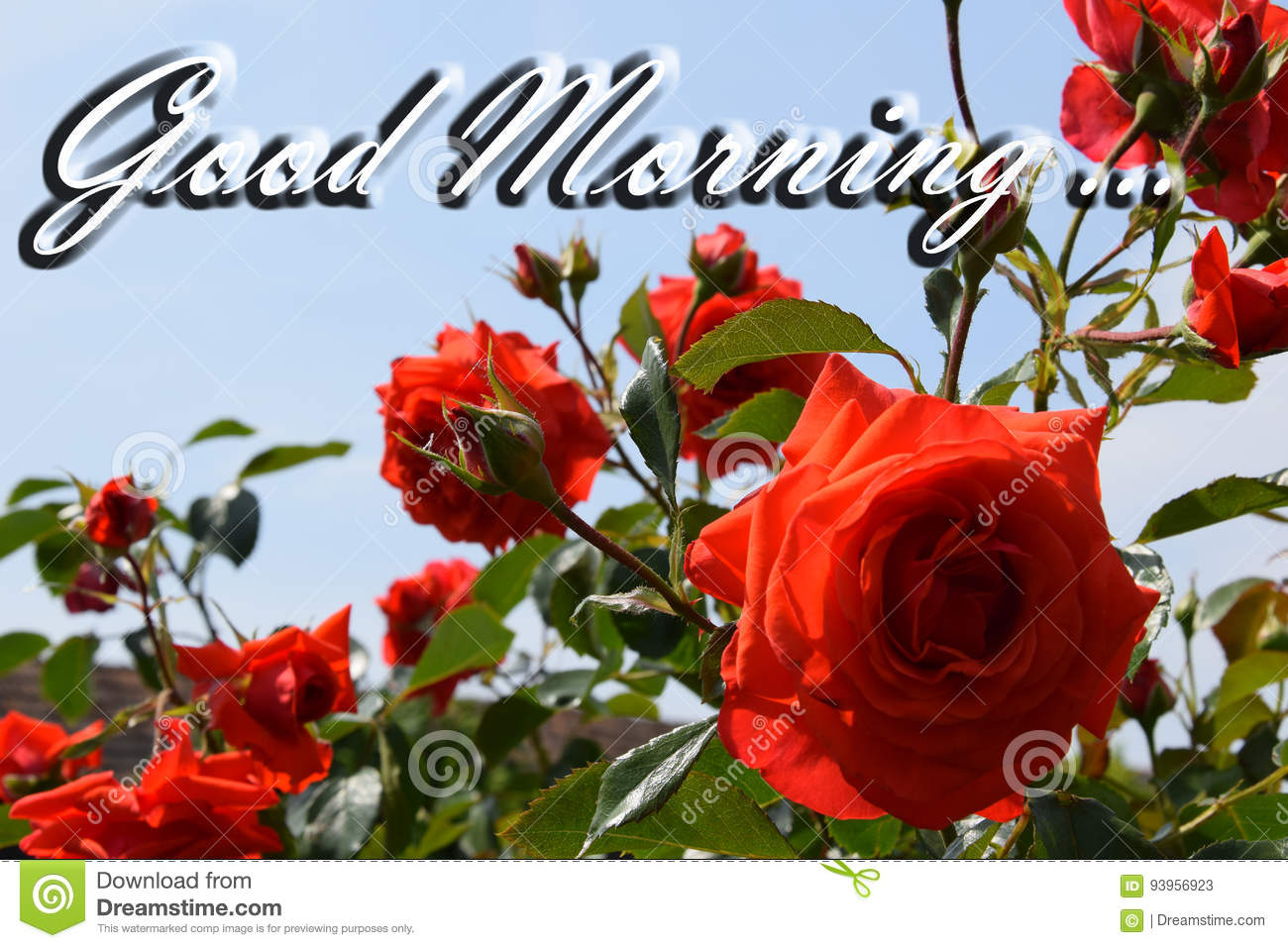 3 835 Morning Quote Photos Free Royalty Free Stock Photos From Dreamstime