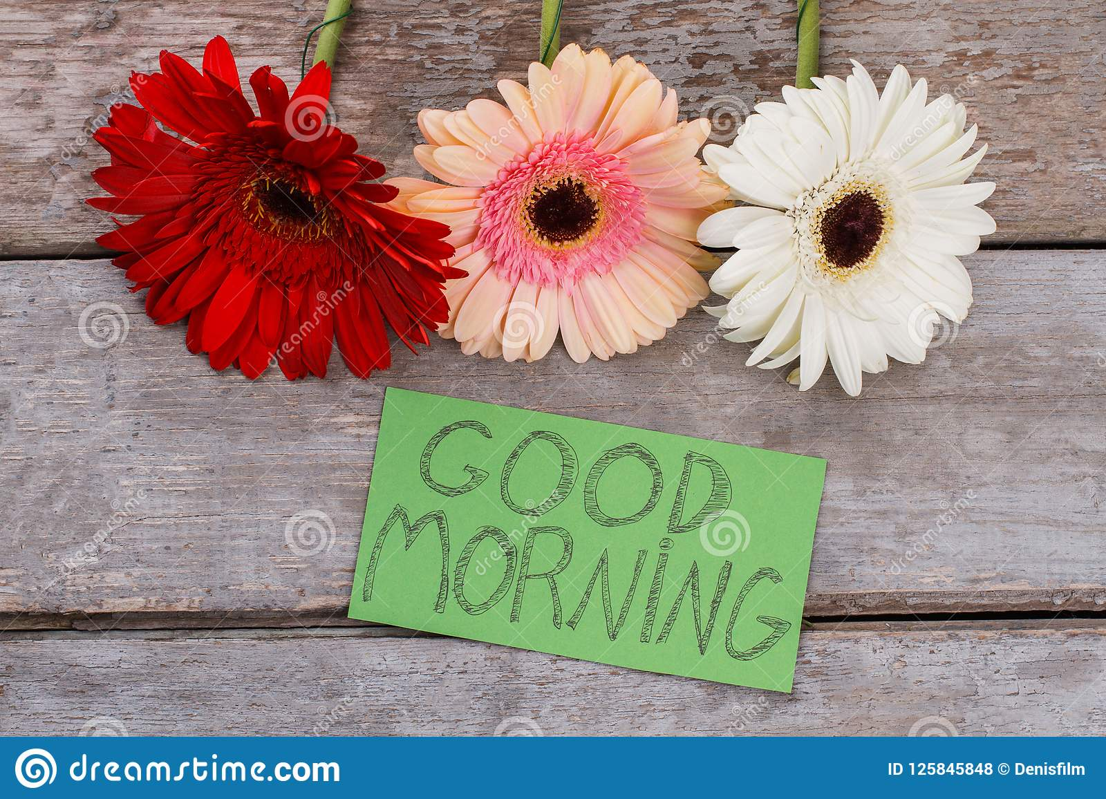 Good Morning Wish And Gerbera Daisy Flowers Heads Stock Photo