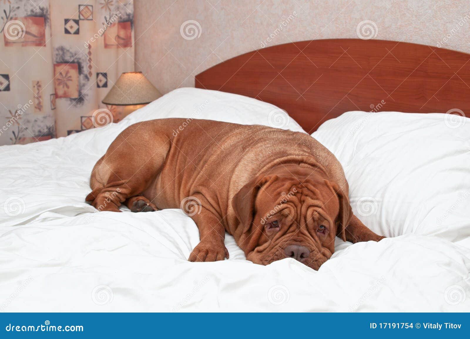Goodnight Dog Stock Images - Image: 17191754