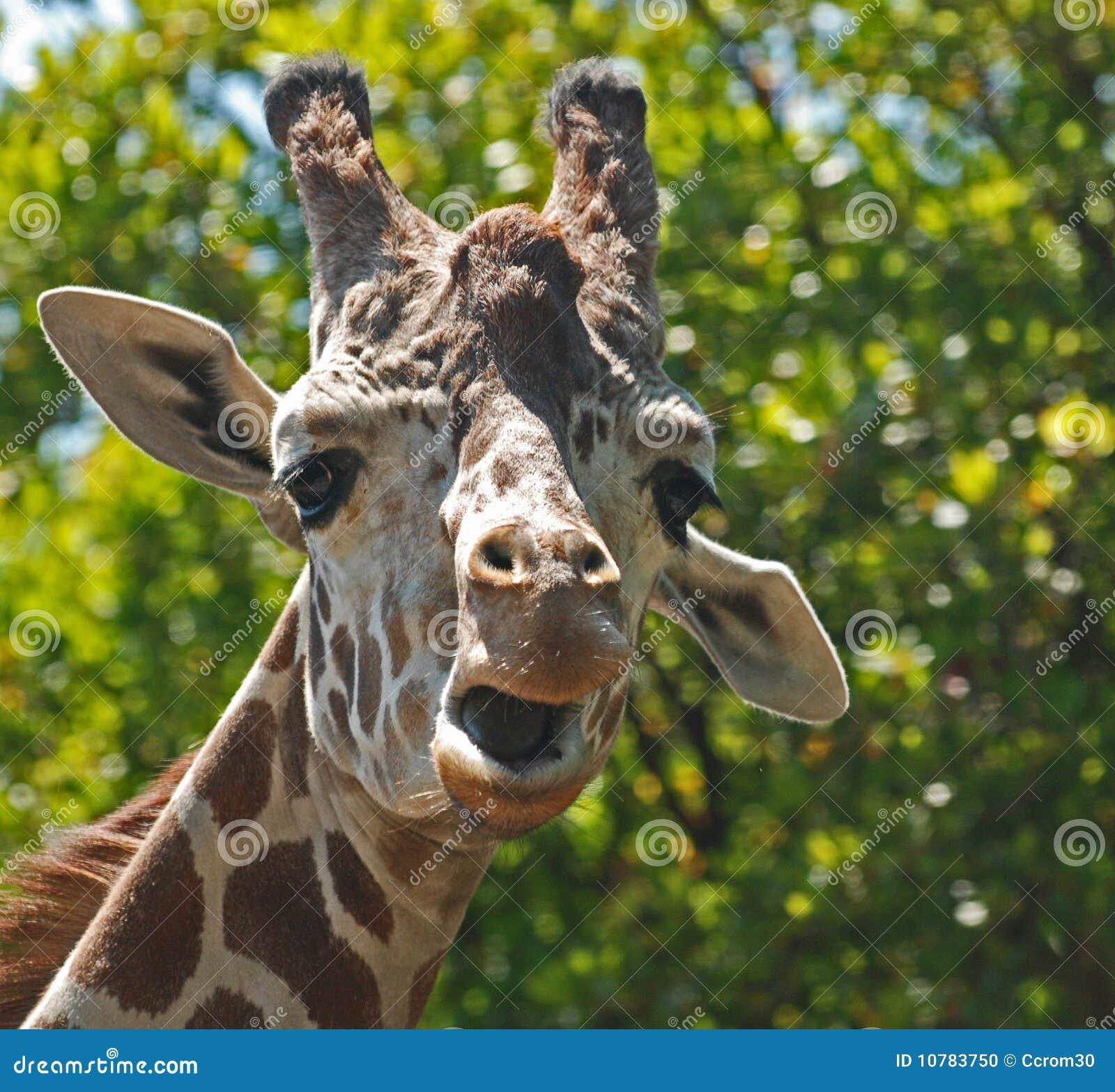 Goofy Giraf