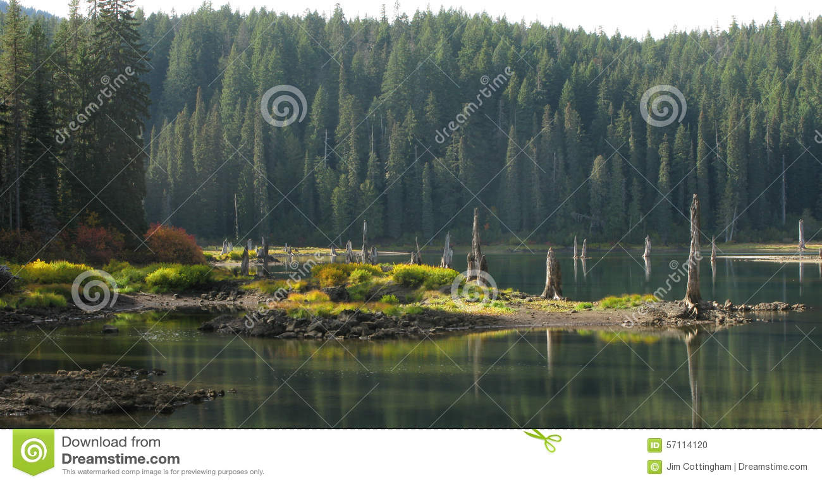 Goose Lake Wa Gifford Pinchot National Forest Stock