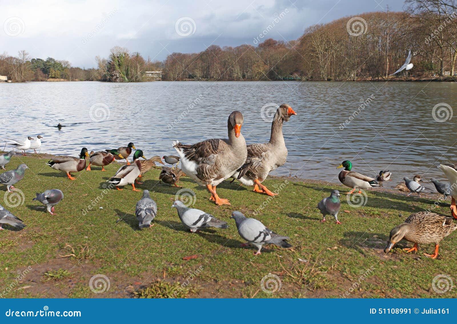 canada goose sale le parc