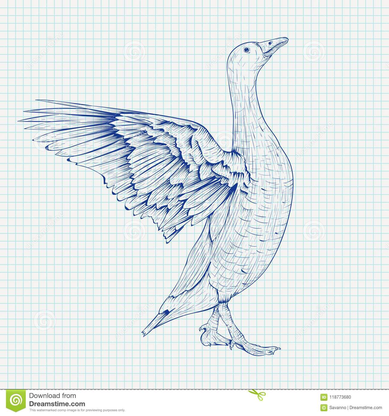 Goose sketch angry bird with lifted wings on lined paper background