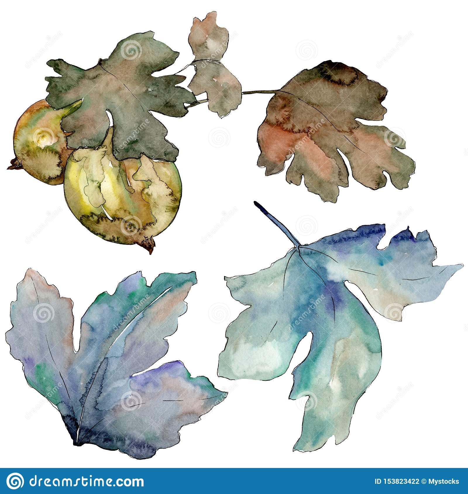 Gooseberry green leaves isolated. Watercolor background illustration set. Isolated berry illustration element.