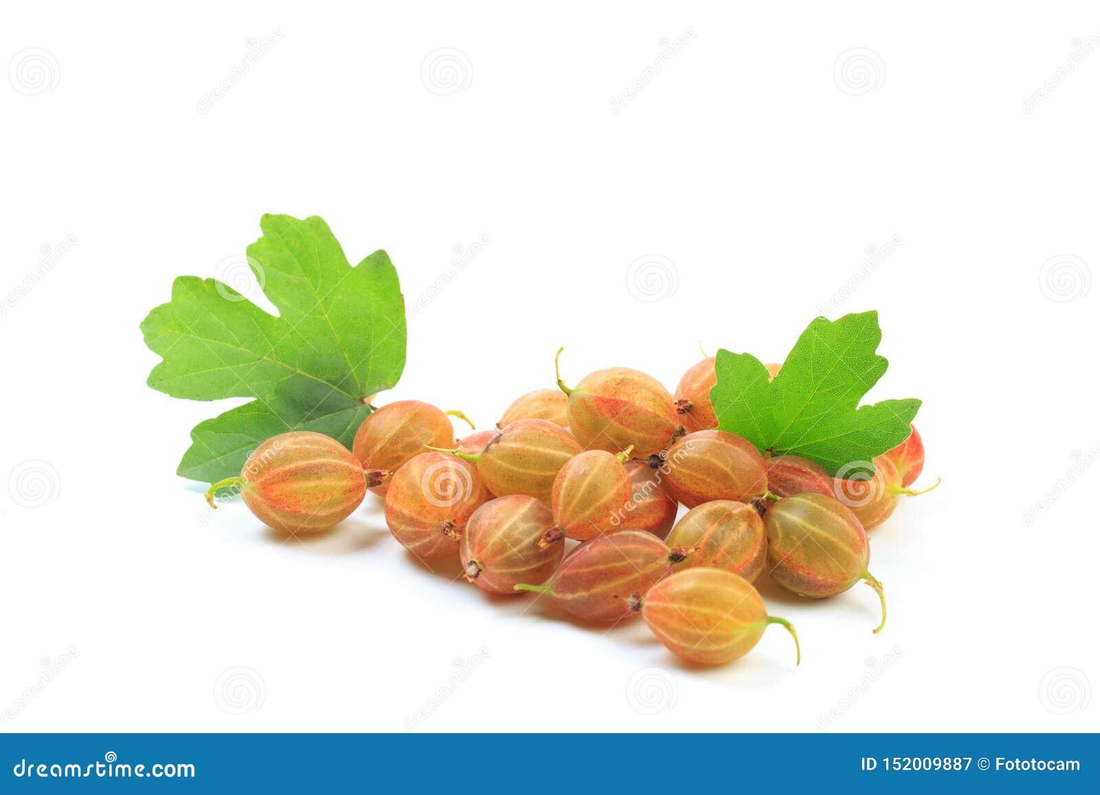 Gooseberry isolated on white background - Image