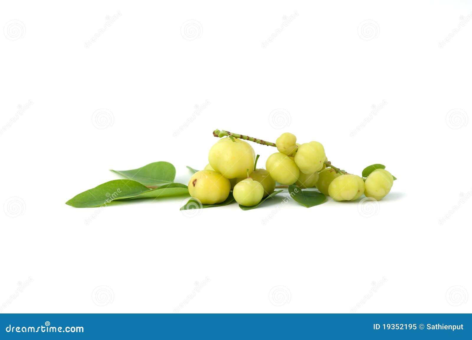 Gooseberry pequeno da estrela no fundo branco