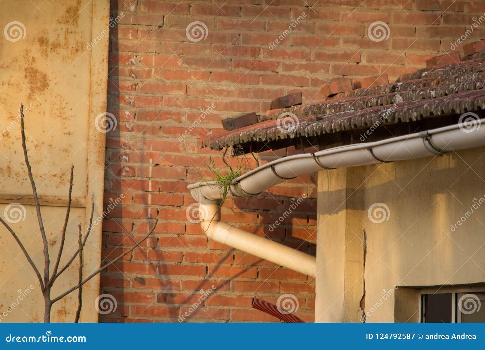 Goot van het dak met gras wordt losgemaakt dat