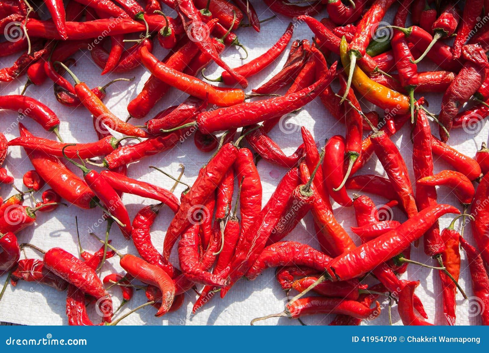 Gorący chili w słońca świetle