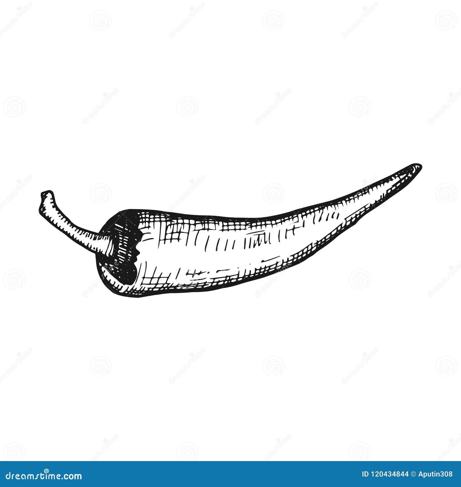Gorący pepper Prosty wektorowy nakreślenie