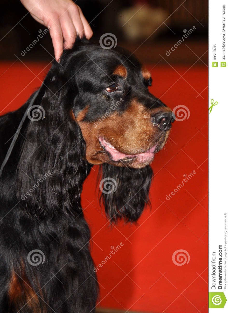 The Game Plan Dog Breed