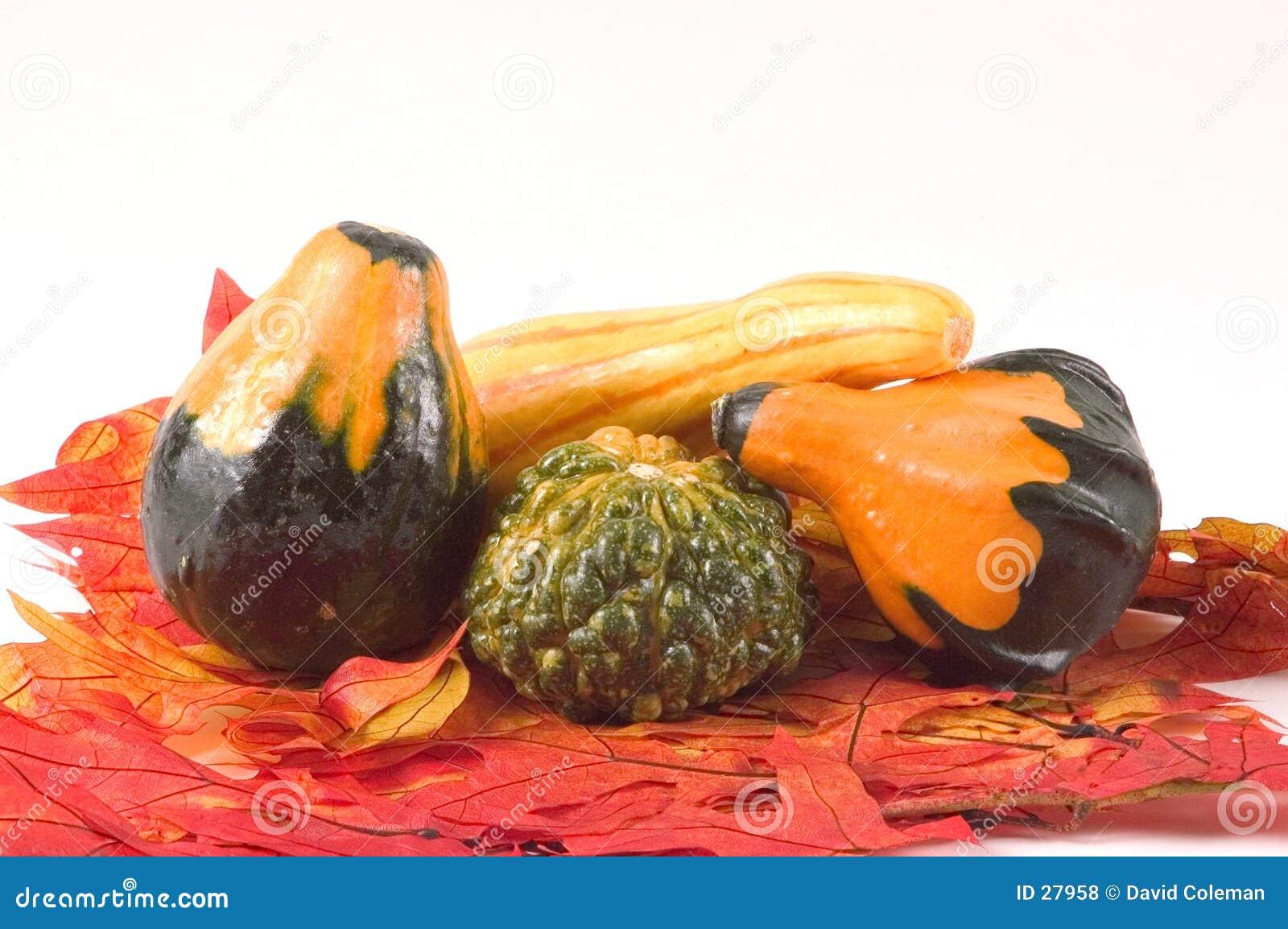 Gords auf Fall Blättern
