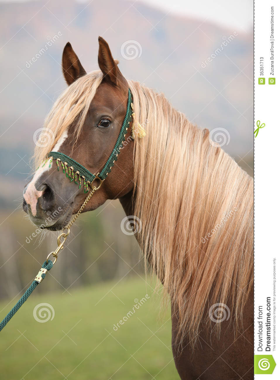 long manes stock photos - photo #19