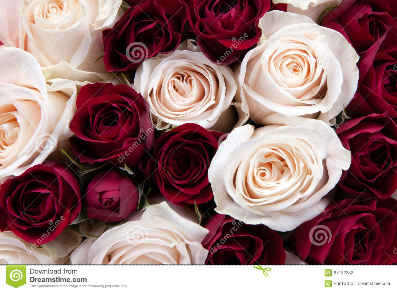 Gorgeous close up of a bouquet of red and white roses stock photo royalty free stock photo buycottarizona Choice Image