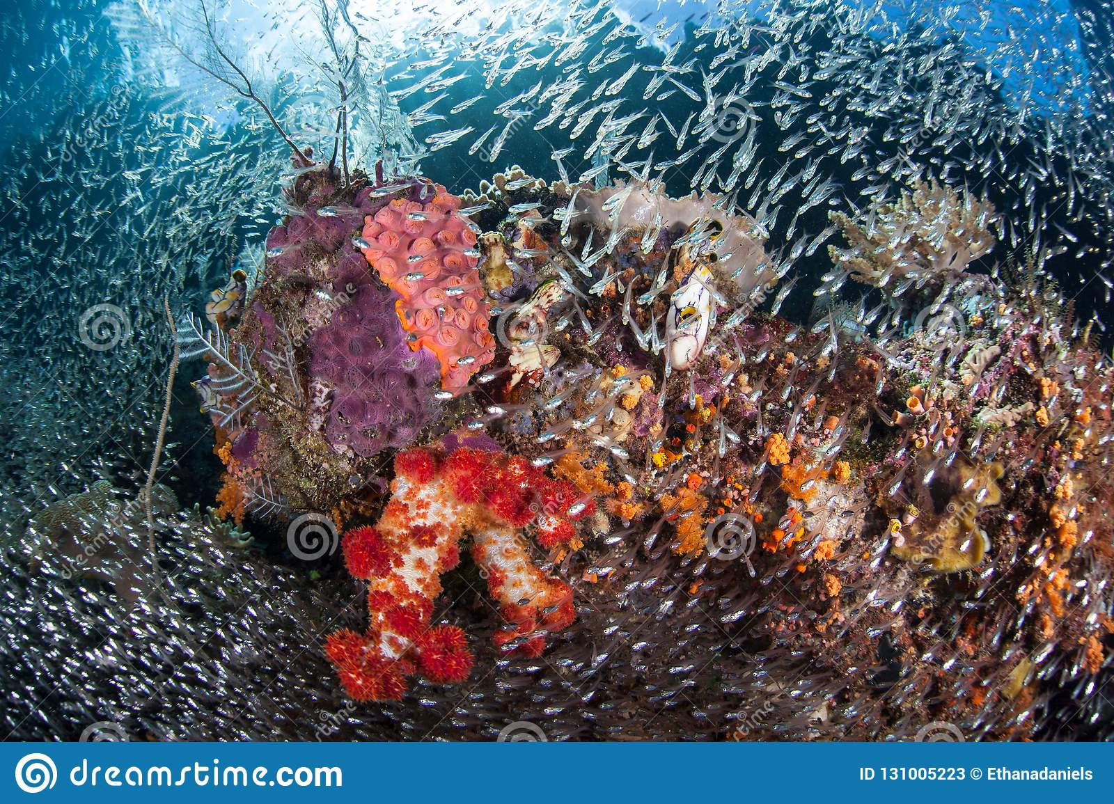 Gorgeous Coral Reef In Raja Ampat Stock Image Image Of Indonesia Beautiful 131005223