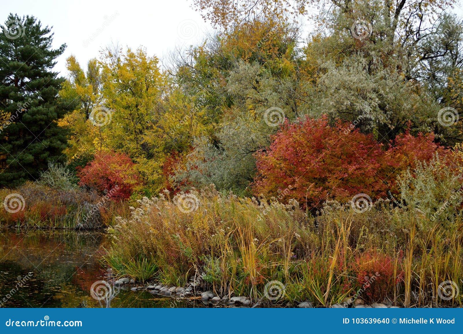 Fall Foliage Boise Idaho Albertson Park