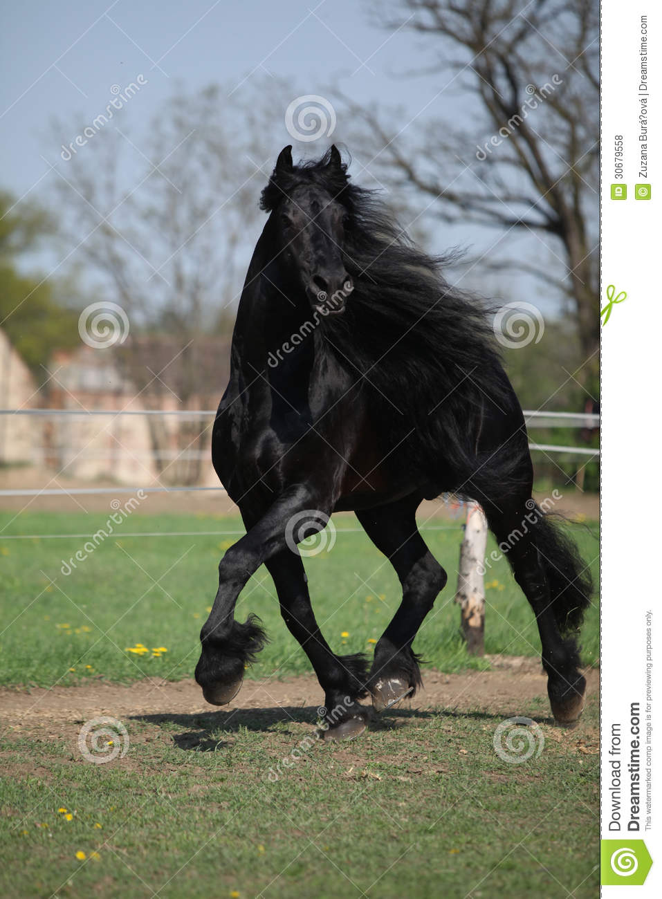 long manes stock photos - photo #23