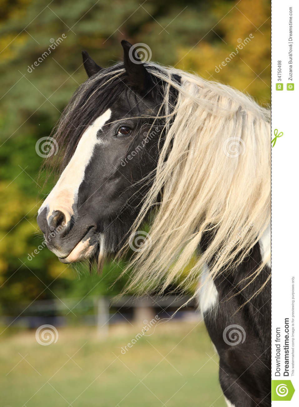 long manes stock photos - photo #36