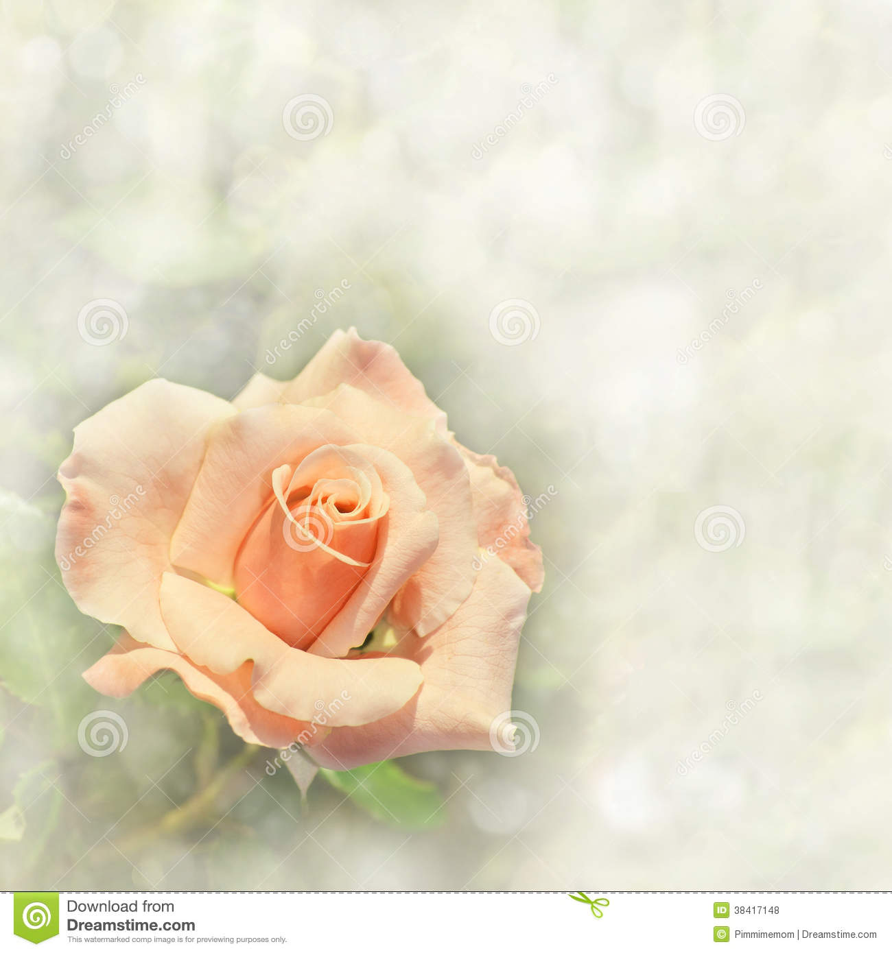 Gorgeous light orange rose on a dreamy background