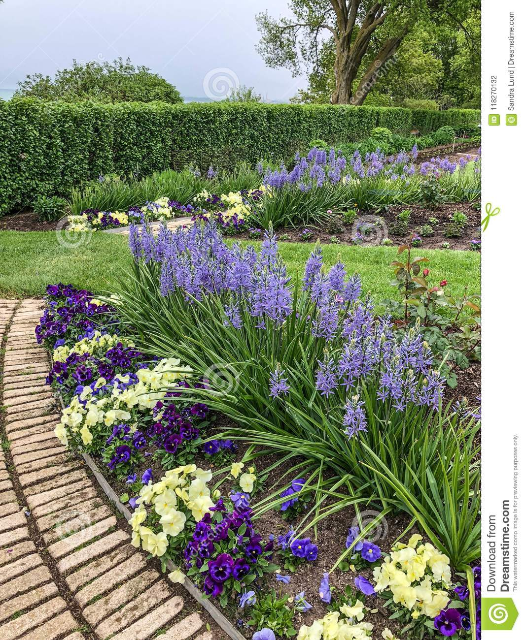 Gorgeous Purple And Yellow Flowers In Flower Garden Stock Photo