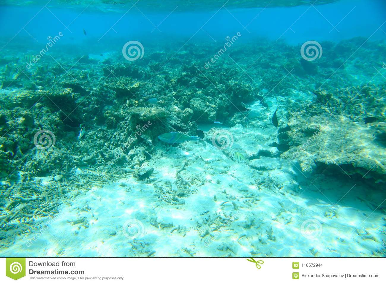 Gorgeous view on coral reefs and white sand under water. Underwater world. Maldives, Indian Ocean,
