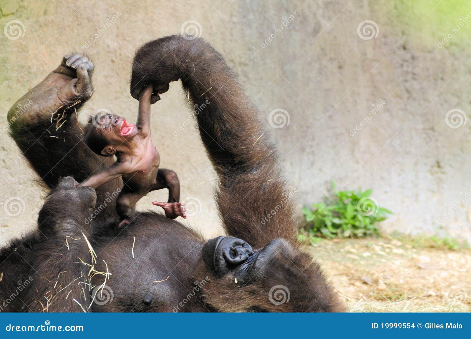 Gorila de la madre y del bebé