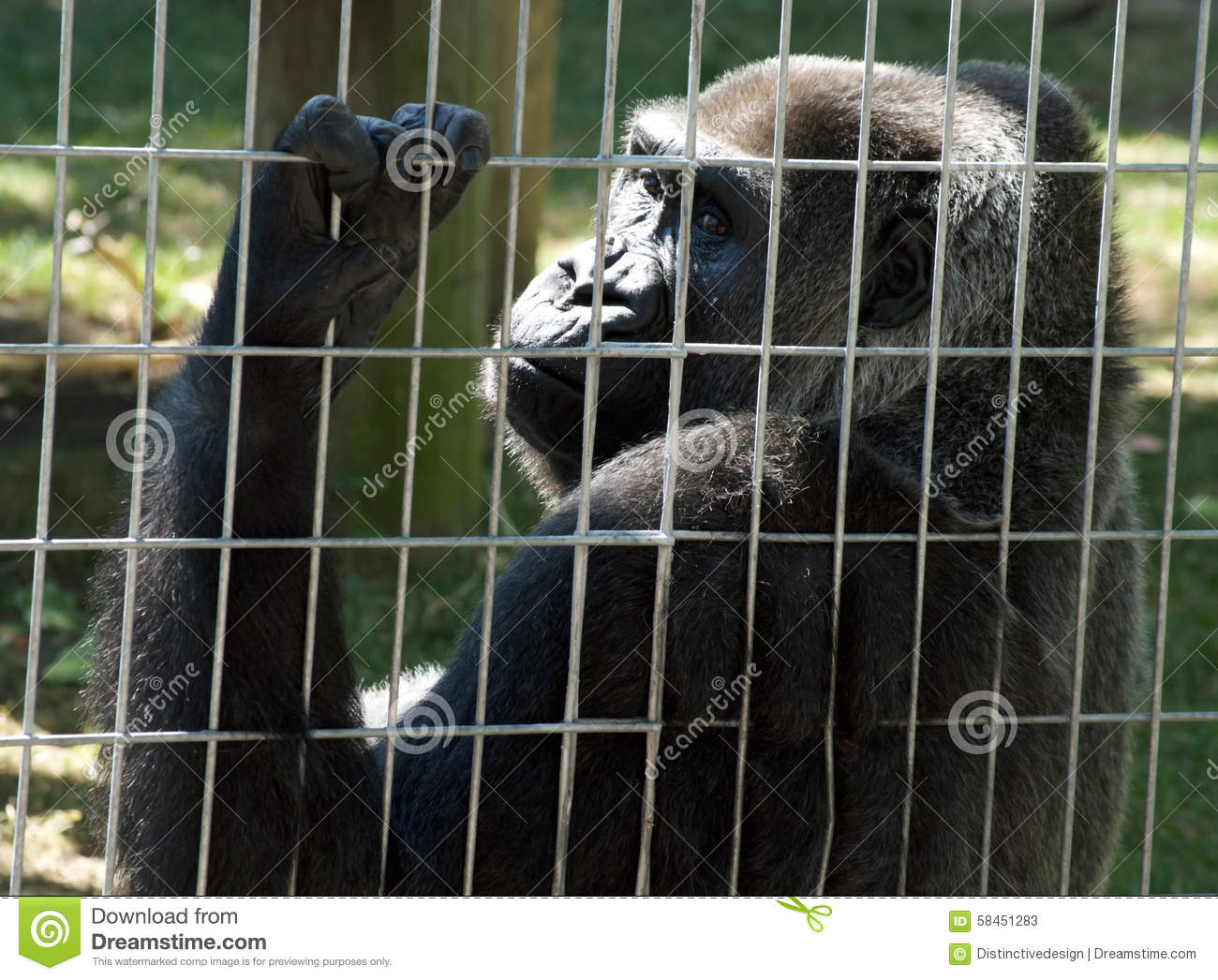 zoos animals prisons Close zoos and i absolutely garuntee animals such as tigers and pandas will be extinct within 20 years, probably within 10 zoos are absolutely the last hope for such animals besides, they get fed and nowadays they have lots of room.