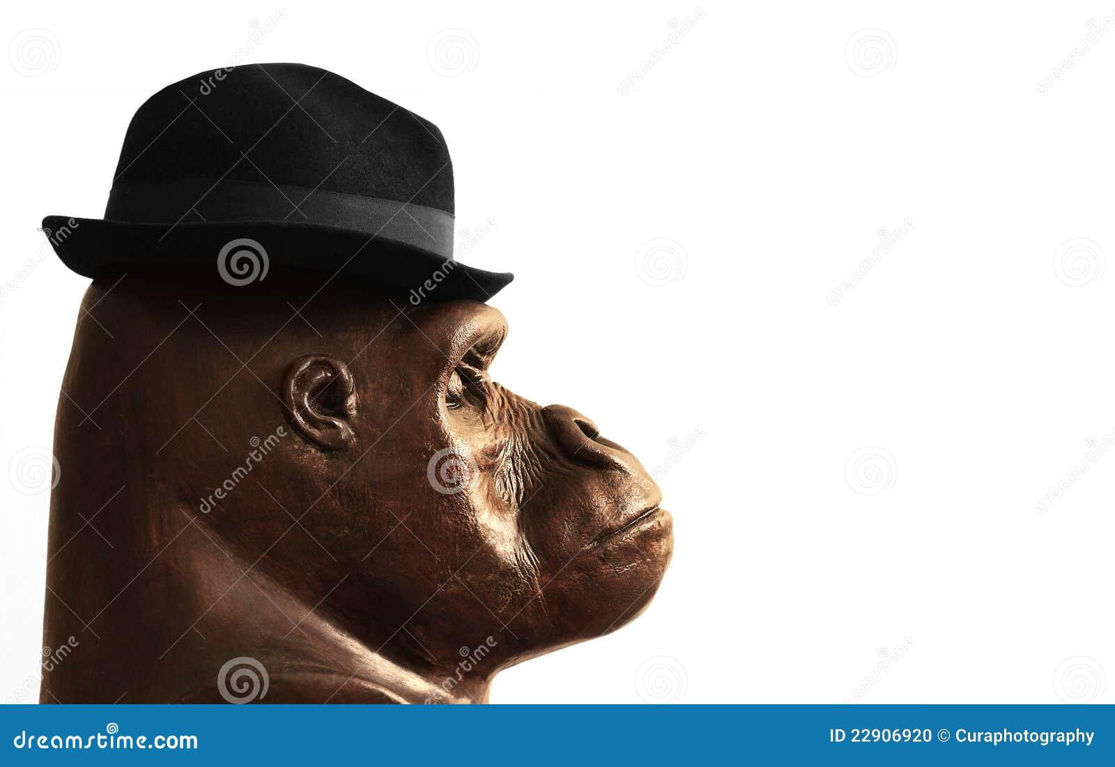 gorilla in hat stock photo image 22906920