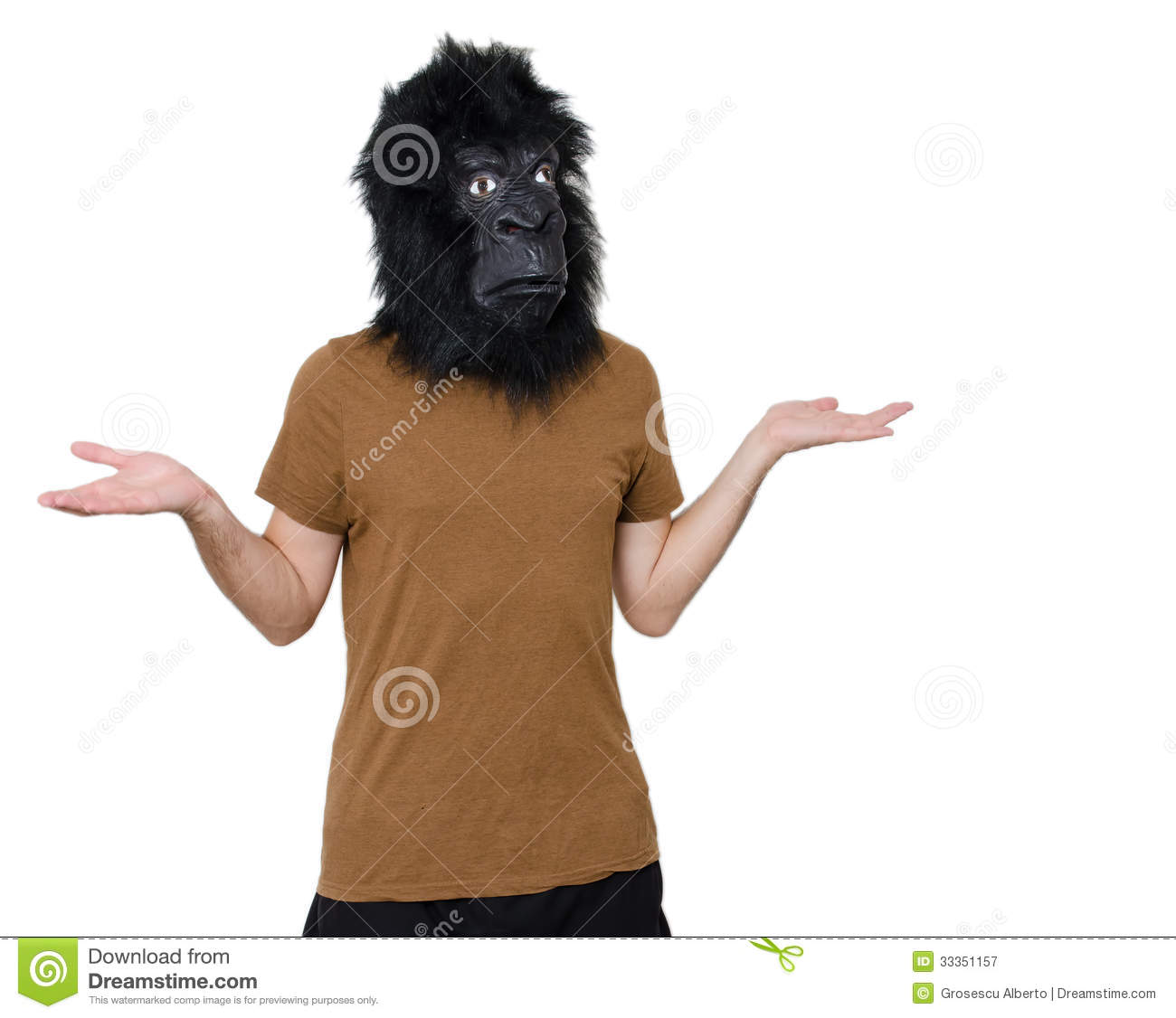 gorilla man confused royalty free stock photography