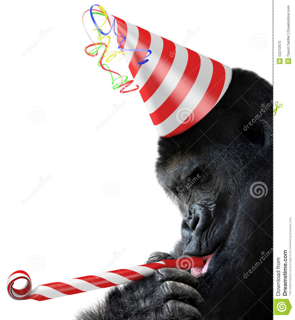 white striped party hat and blowing a noisemaker a real party animal