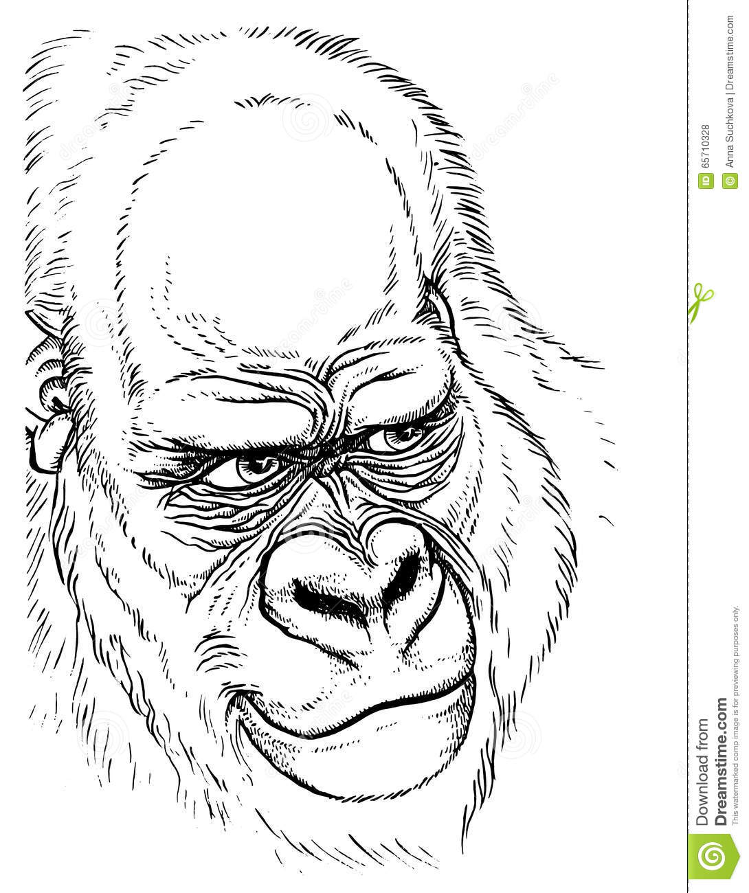 Gorilla Face Line Drawing : Gorilla portrait hand line drawing stock vector image